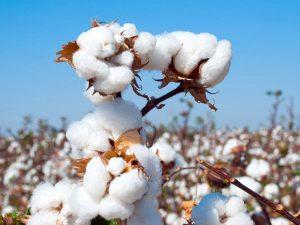 منظور از پوشاک و یا لباس نخ پنبه ((cotton چیست؟